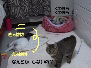 c0139488_1555430.jpg