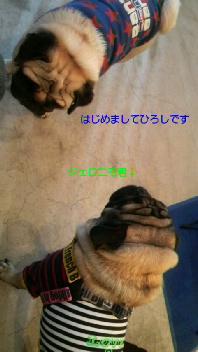 f0175397_17302029.jpg