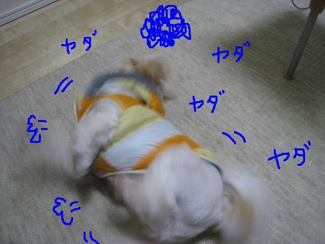 f0195809_0163120.jpg
