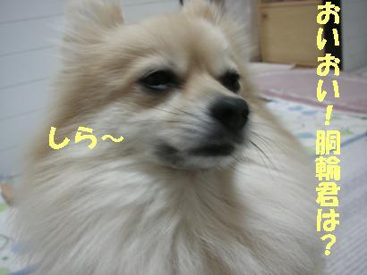 c0179136_20454110.jpg