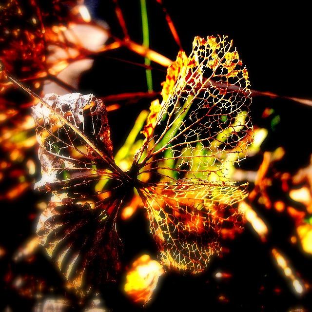 蝶のよう_d0113340_22241222.jpg