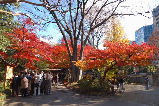 大名庭園で紅葉_c0081462_9225128.jpg