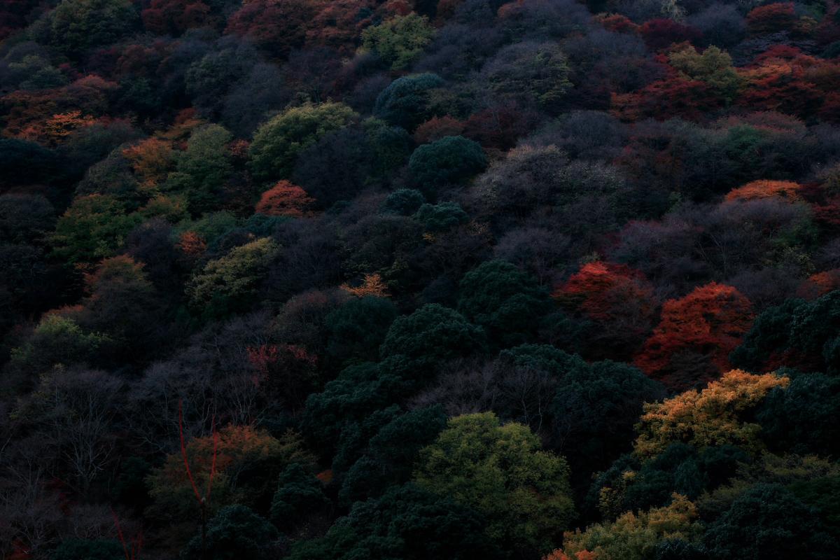 京都 嵐山 3_f0021869_21463644.jpg