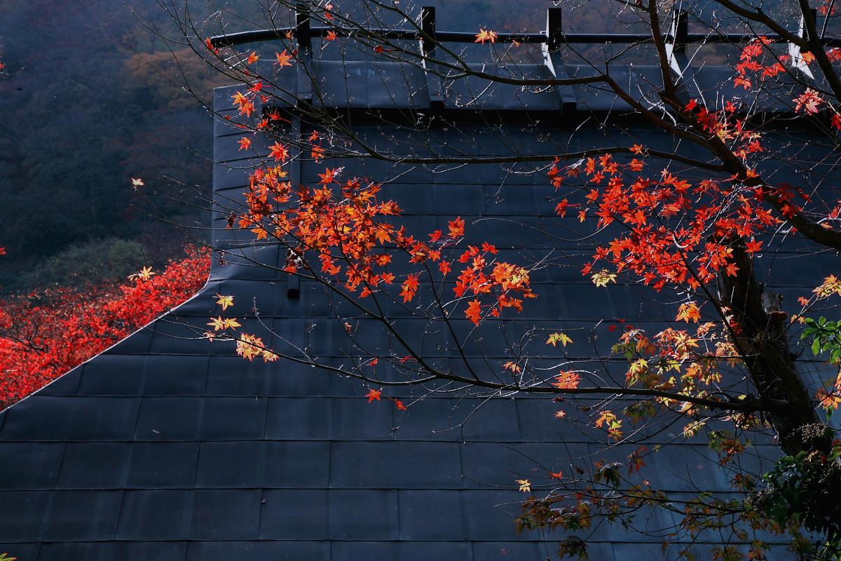 京都 嵐山 3_f0021869_21483730.jpg