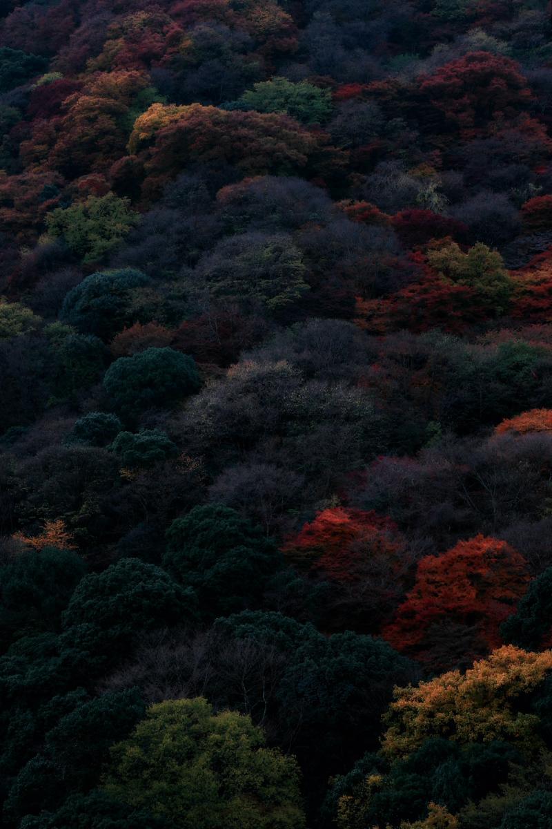 京都 嵐山 3_f0021869_21511661.jpg
