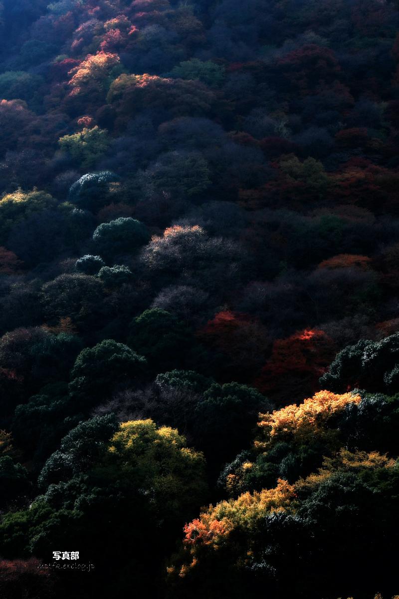 京都 嵐山 3_f0021869_2223031.jpg