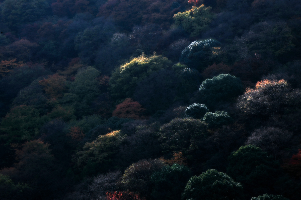京都 嵐山 3_f0021869_2232235.jpg