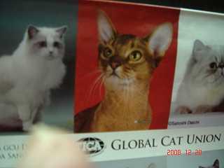 TICA&GCU CAT SHOW_e0033609_16353159.jpg