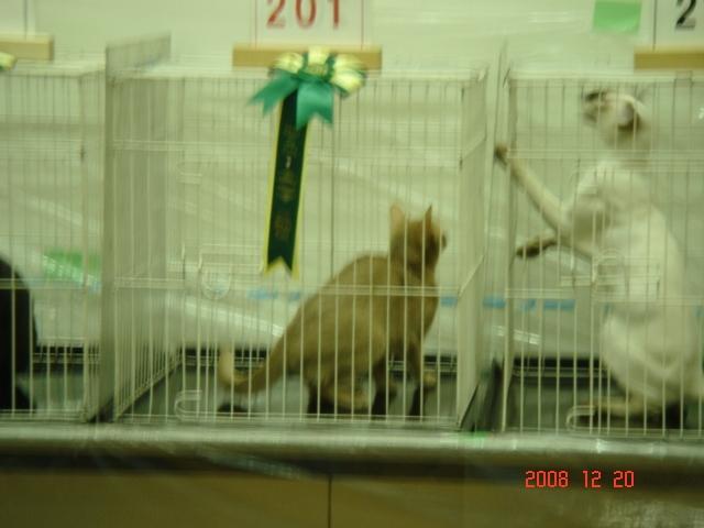 TICA&GCU CAT SHOW_e0033609_16375989.jpg