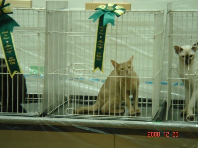 TICA&GCU CAT SHOW_e0033609_16381134.jpg