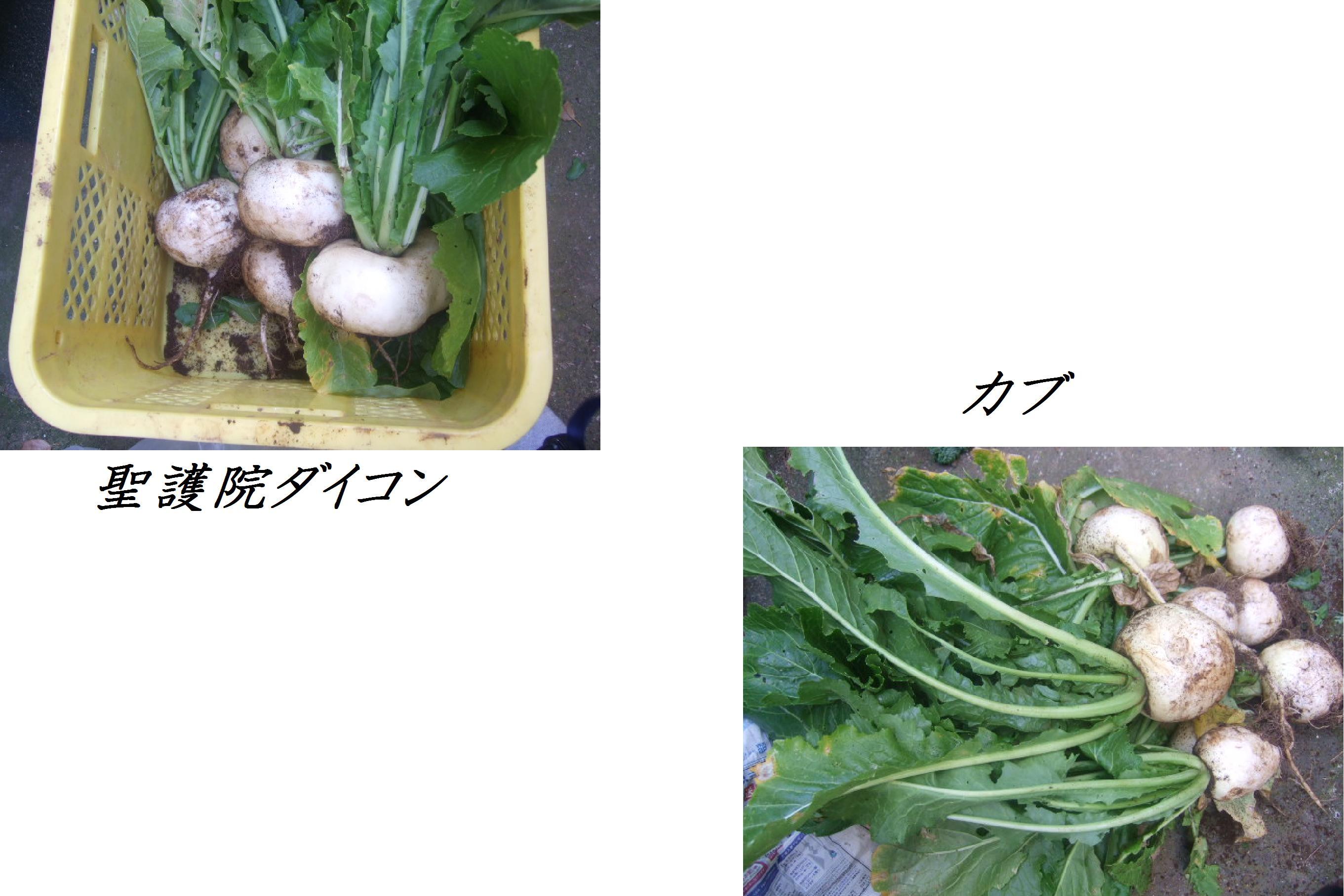 野菜大豊作.....収穫だ!_b0137932_1013190.jpg