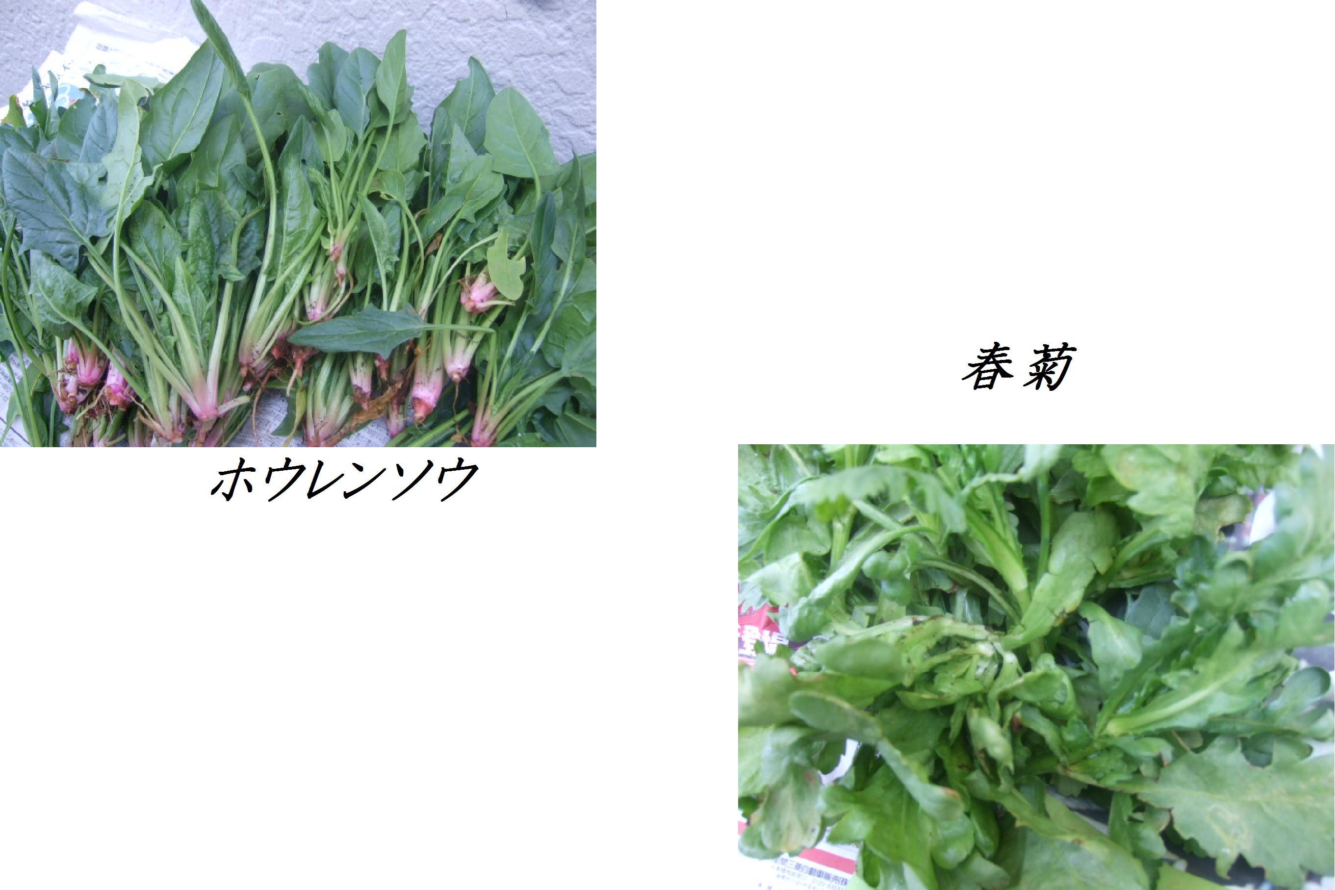 野菜大豊作.....収穫だ!_b0137932_1015499.jpg