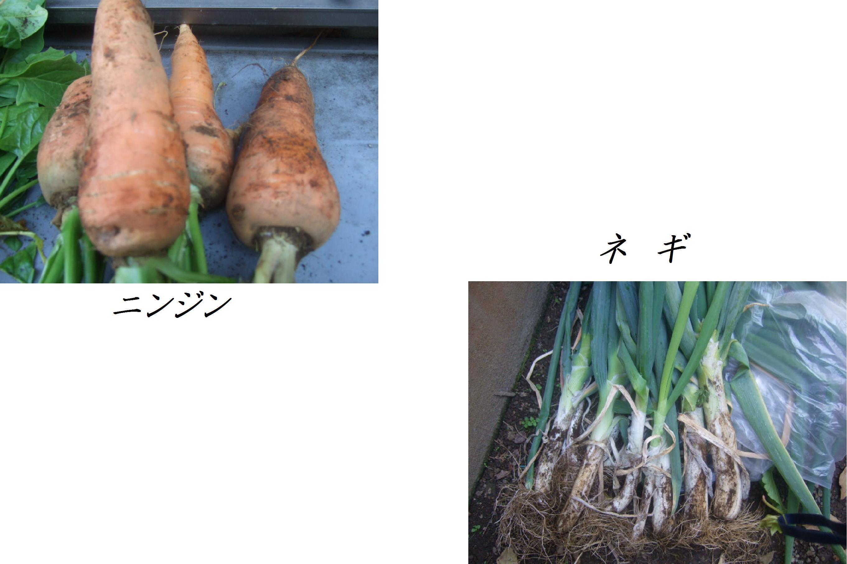野菜大豊作.....収穫だ!_b0137932_10183761.jpg