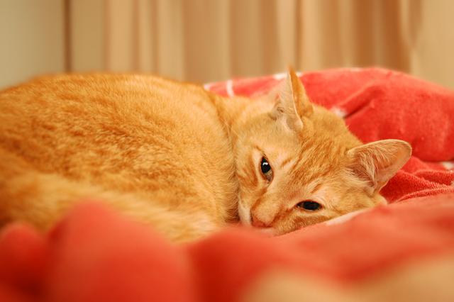 猫のような1日_b0146751_18122946.jpg