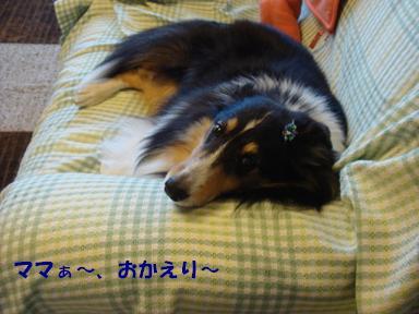 f0046854_2012156.jpg