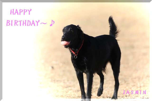 2008 4th Happy Birthday~ Jasmin♪_c0134862_21521110.jpg