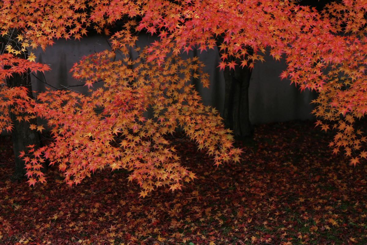 京都 嵐山 4_f0021869_21515728.jpg