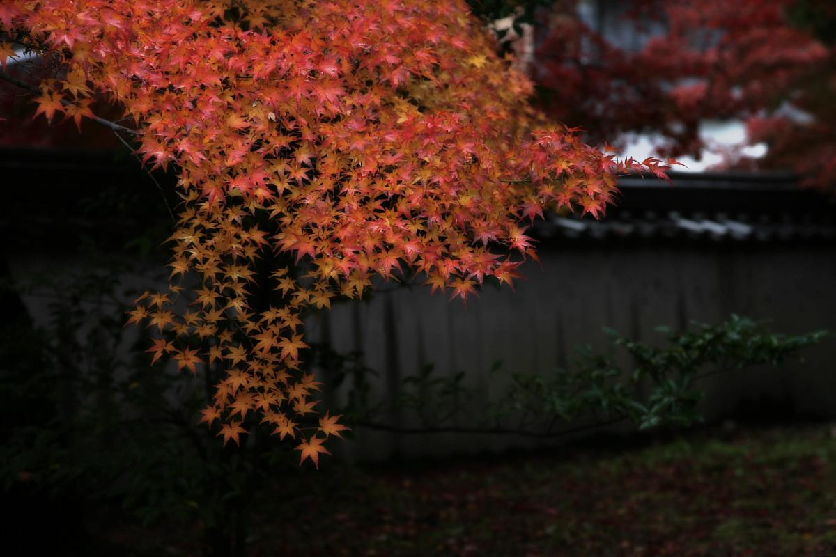 京都 嵐山 4_f0021869_21525465.jpg