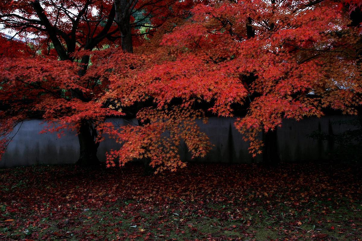 京都 嵐山 4_f0021869_21545233.jpg