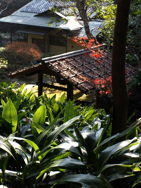 旧古河庭園 (12/20)_b0006870_19213637.jpg