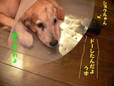 f0118135_18254180.jpg
