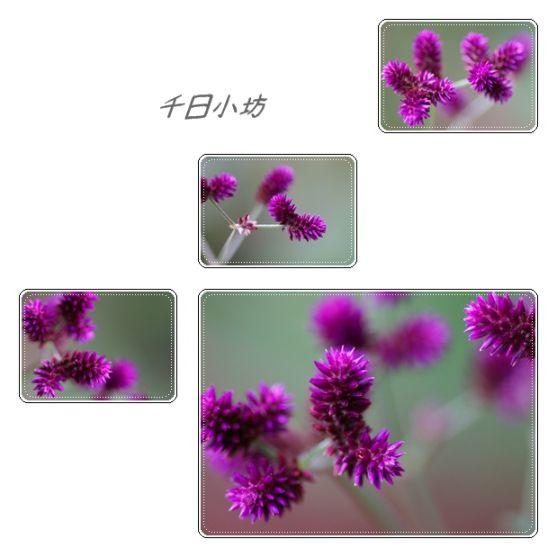 e0040092_0455217.jpg