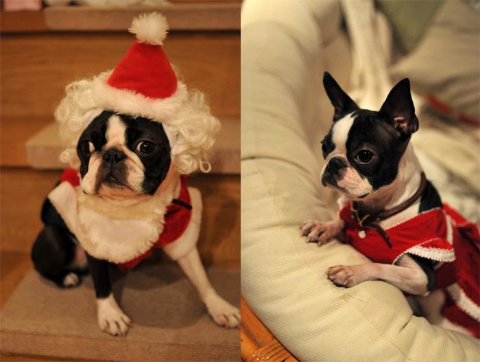 Hanachacha Christmas _b0133509_1461253.jpg