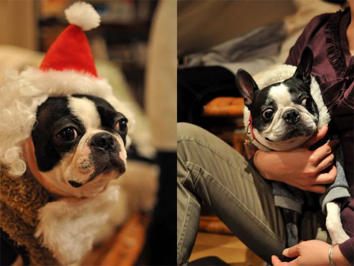 Hanachacha Christmas _b0133509_147178.jpg