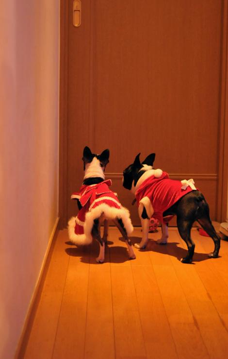 Hanachacha Christmas _b0133509_1482630.jpg