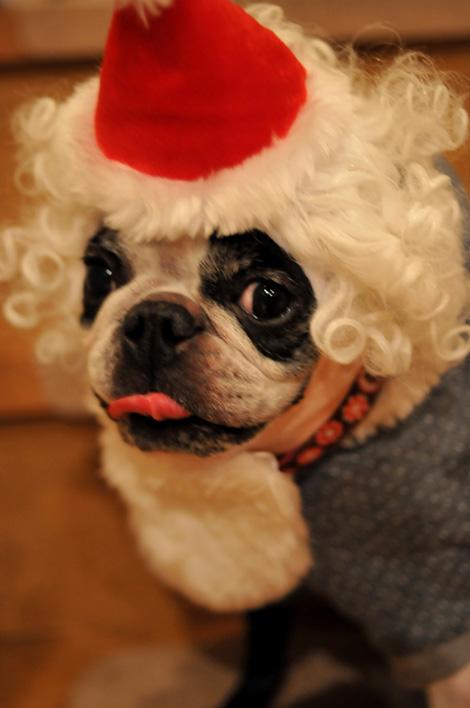 Hanachacha Christmas _b0133509_1484774.jpg