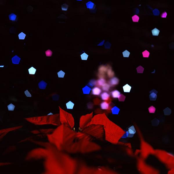 メリークリスマス_c0065410_21403464.jpg