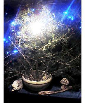 メリークリスマス☆_a0083140_1144497.jpg