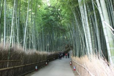 竹林   <京都・嵯峨野>_c0118352_23371392.jpg