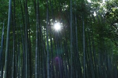 竹林   <京都・嵯峨野>_c0118352_23385313.jpg
