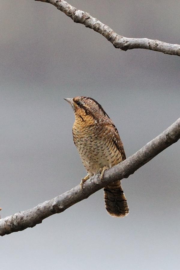 見たこともない鳥・・_c0124055_0513975.jpg
