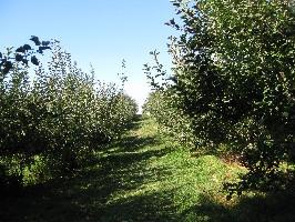 りんご狩り_c0180971_13452946.jpg