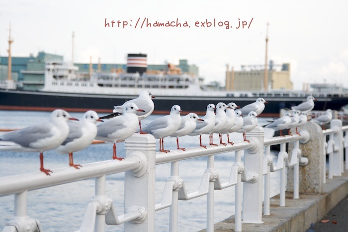 Sea Mews_c0158775_20333690.jpg