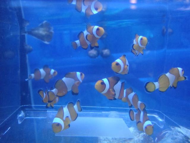 水草・海水魚_f0189122_17464073.jpg
