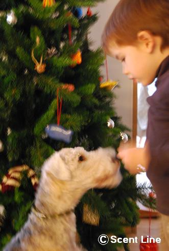 メリークリスマス_c0099133_1351917.jpg