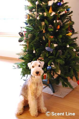 メリークリスマス_c0099133_1352950.jpg