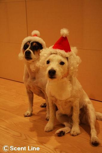 メリークリスマス_c0099133_1372941.jpg