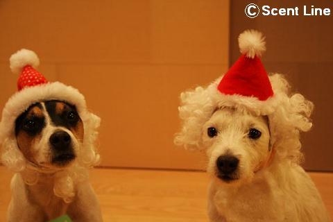 メリークリスマス_c0099133_147186.jpg