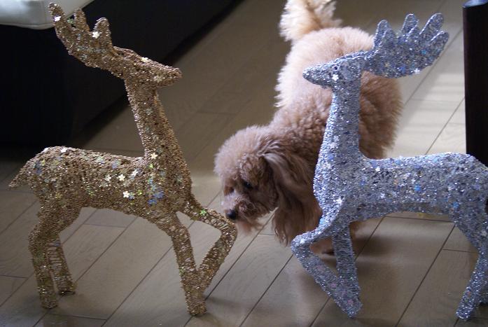 メリークリスマス♪_a0101143_21571783.jpg