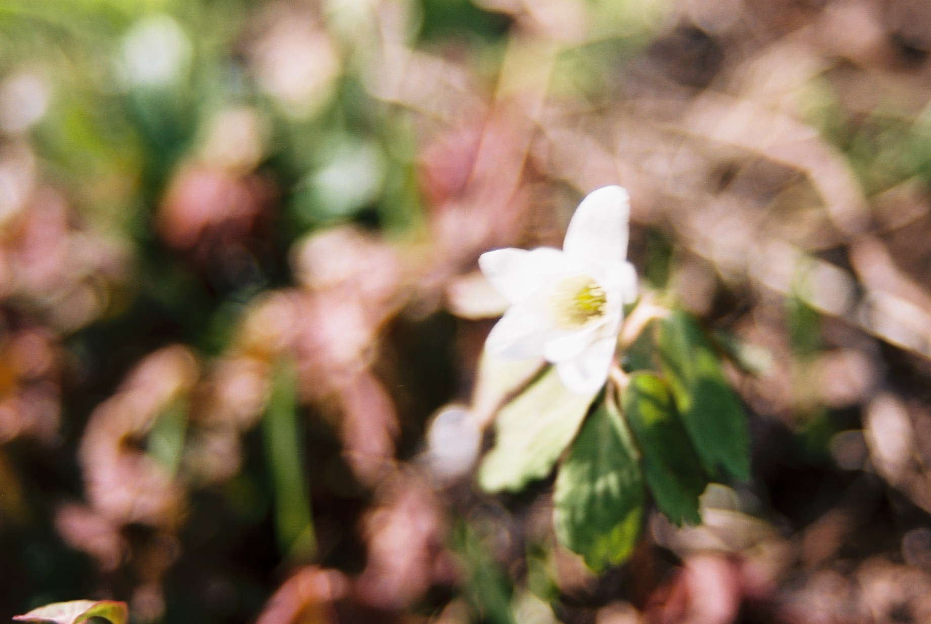 クリスマスイブに…花のギャラリー6_a0103650_15415293.jpg