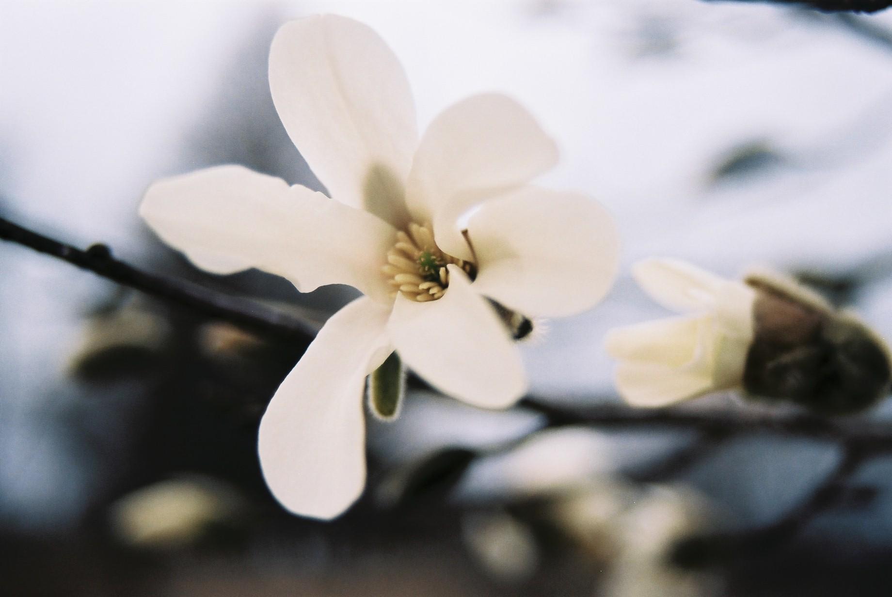 クリスマスイブに…花のギャラリー6_a0103650_15441438.jpg
