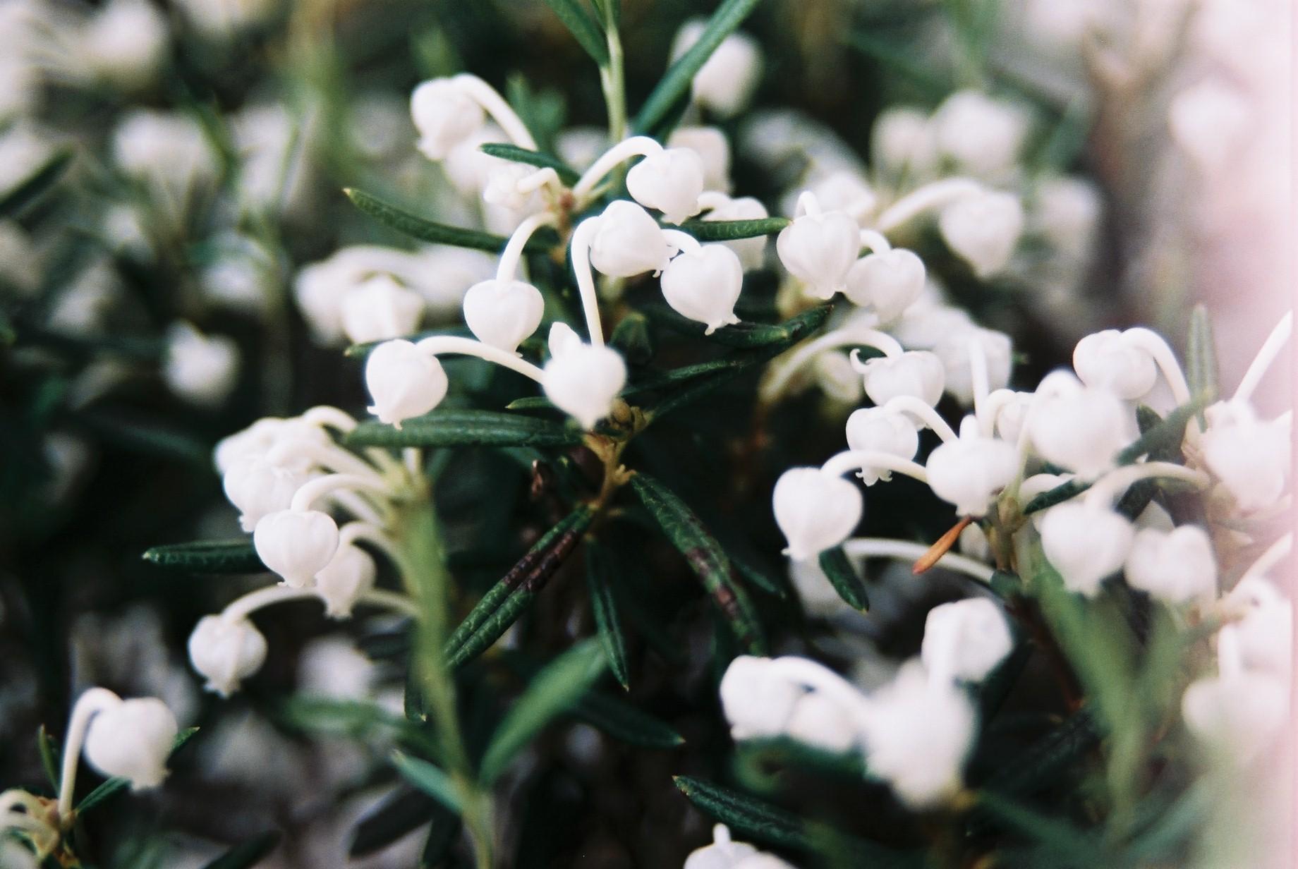 クリスマスイブに…花のギャラリー6_a0103650_154710100.jpg