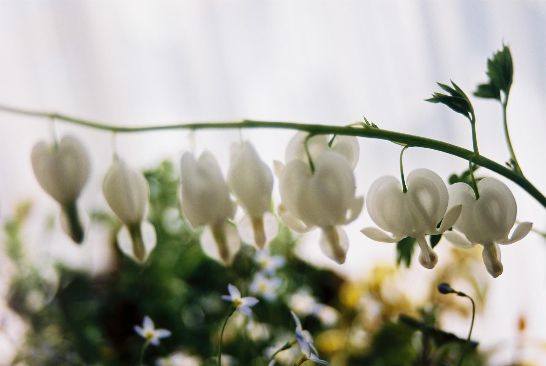 クリスマスイブに…花のギャラリー6_a0103650_15471947.jpg