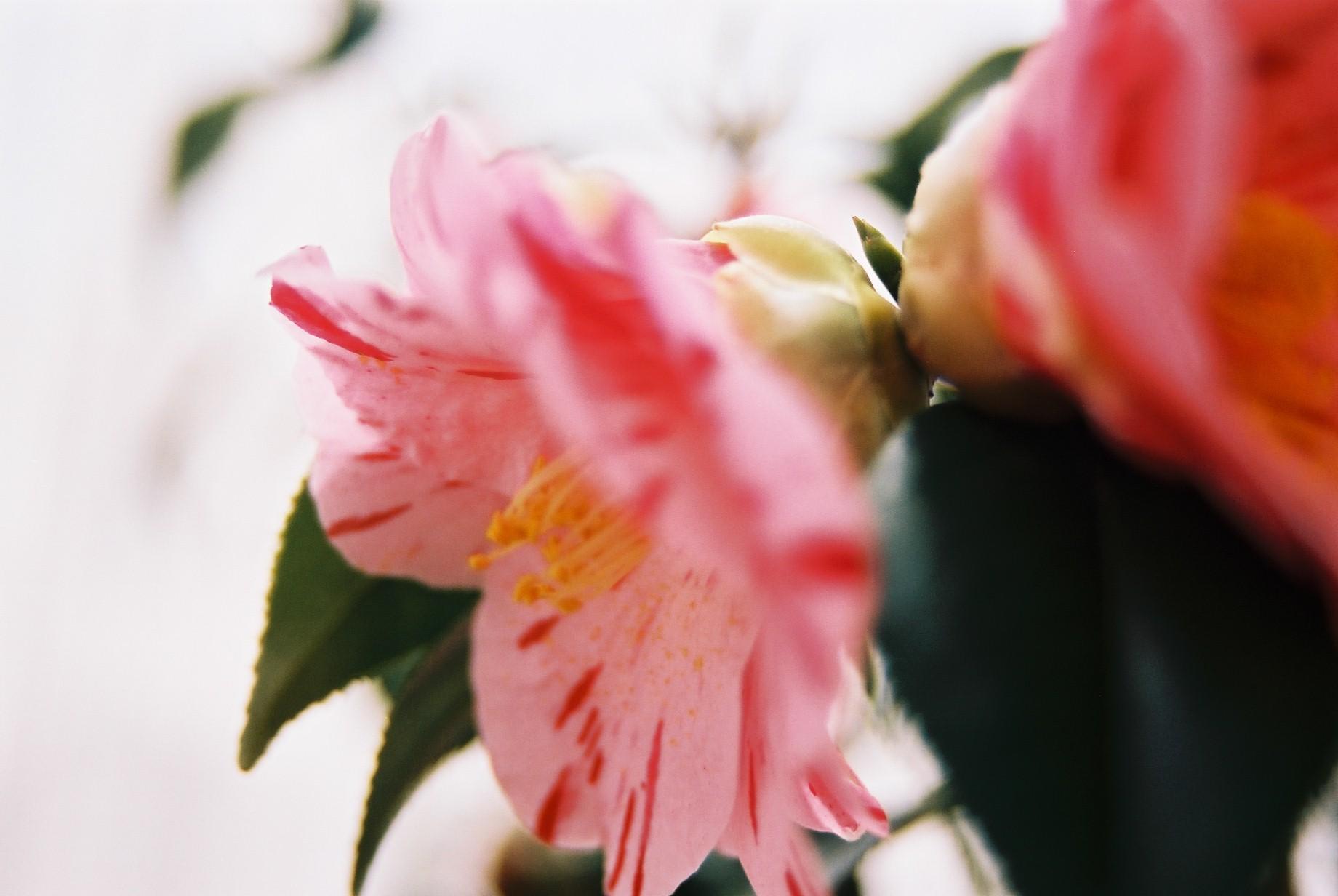 クリスマスイブに…花のギャラリー6_a0103650_15472787.jpg