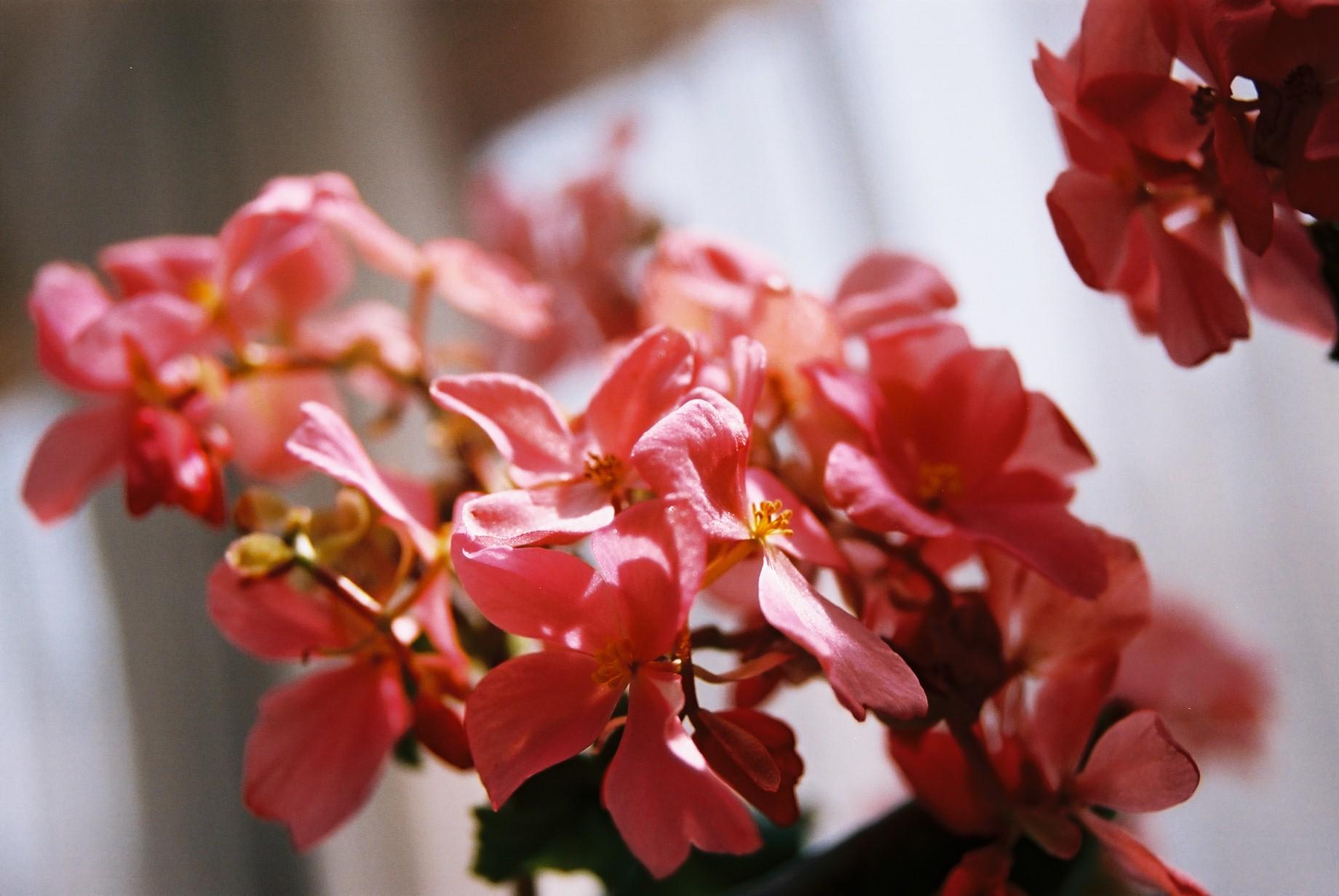 クリスマスイブに…花のギャラリー6_a0103650_15473698.jpg