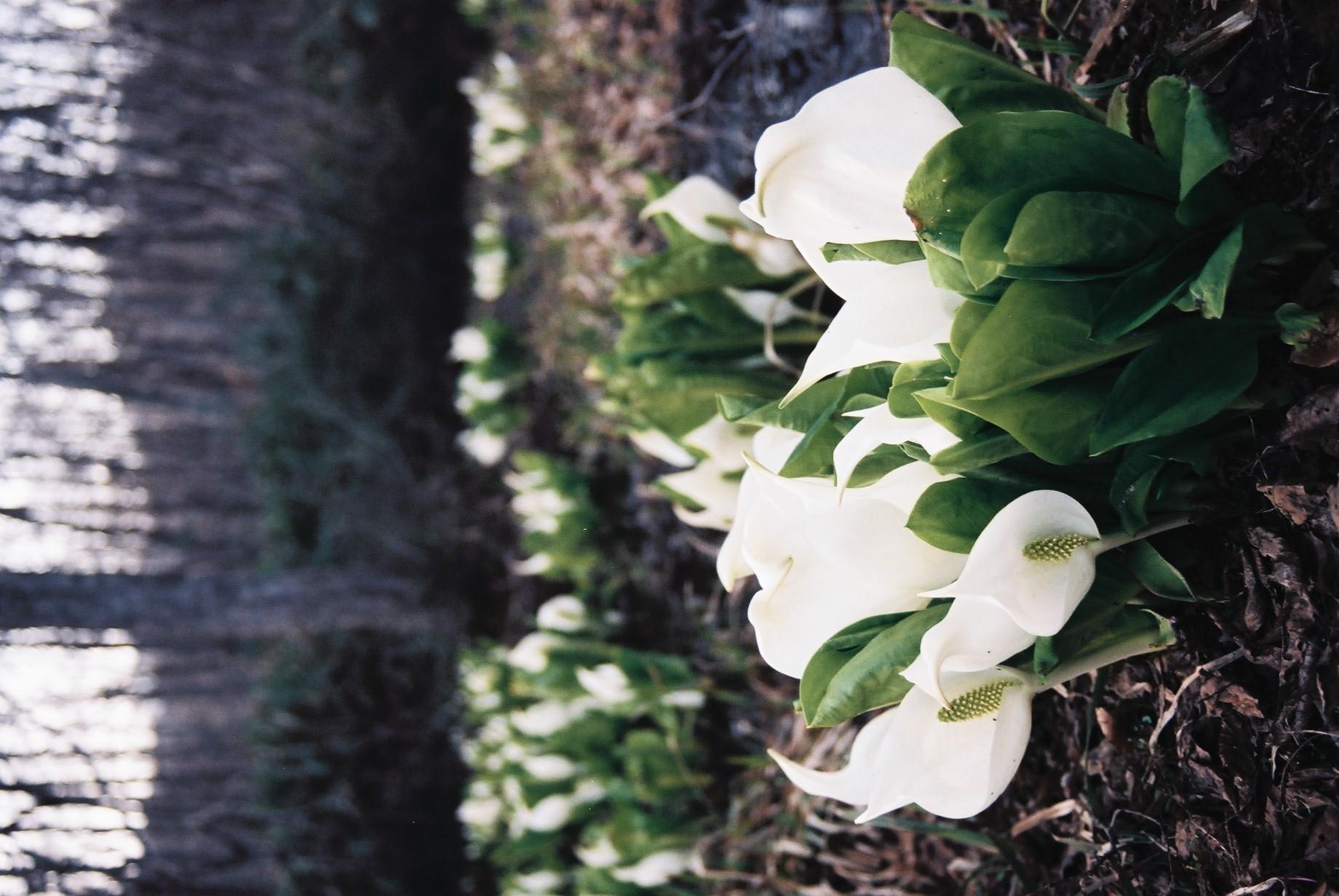 クリスマスイブに…花のギャラリー7_a0103650_16263158.jpg